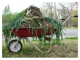Wheelbarrow with weeds